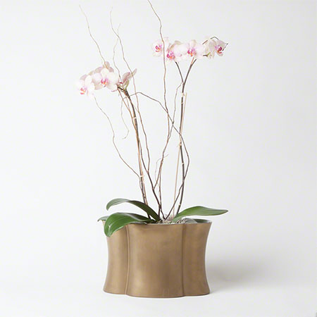 Quatrefoil Planter