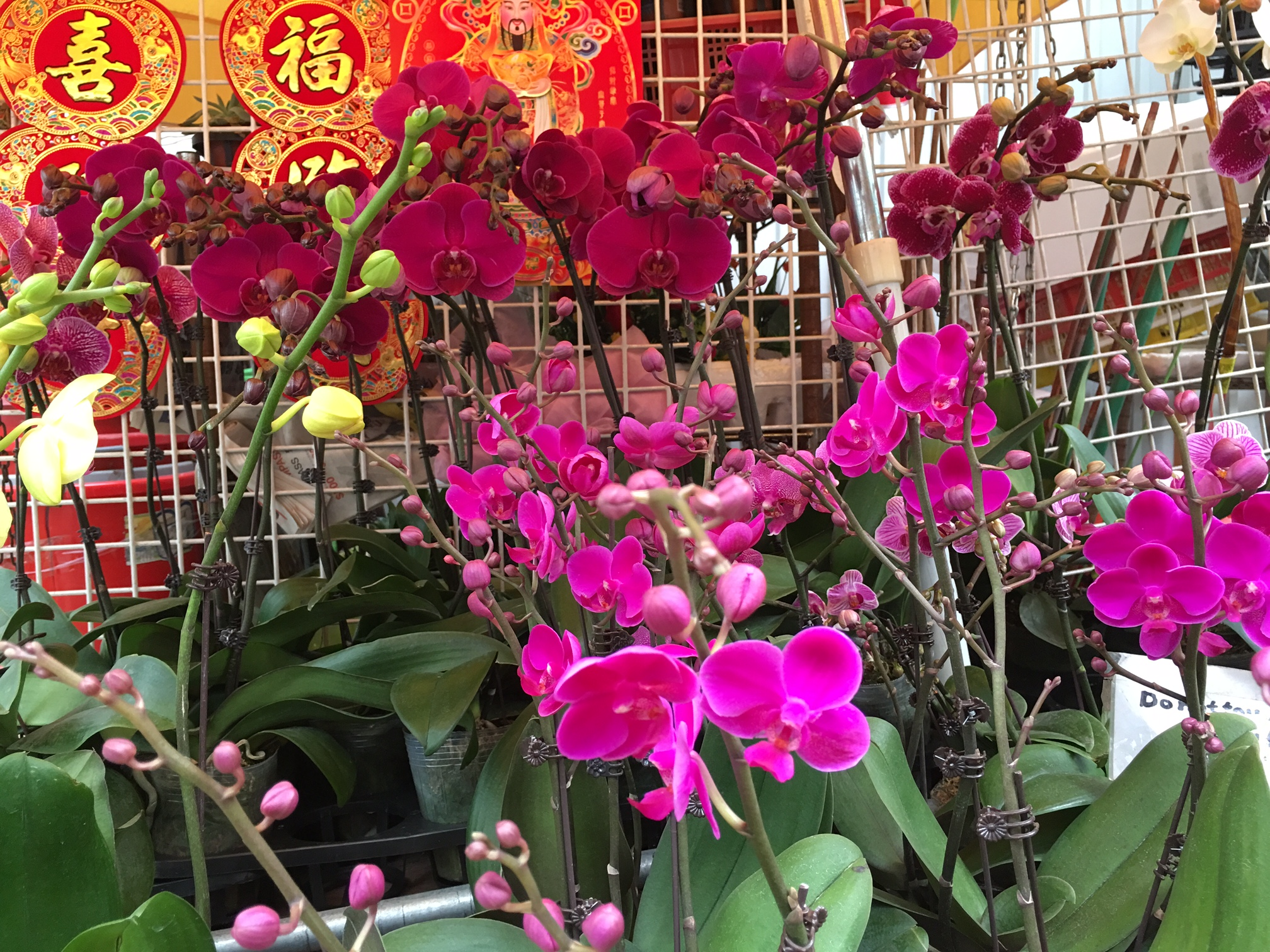 Chinese New Year in Hong Kong | The Roger Thomas Collection